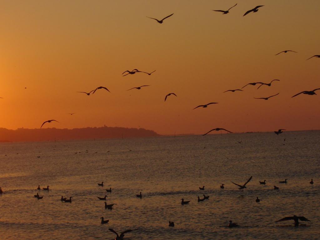 Чайки при изгрев