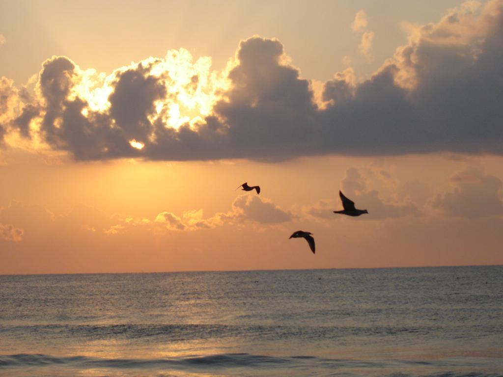 Три птици над морето