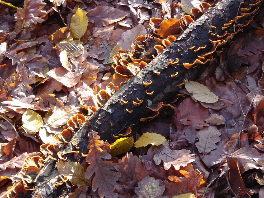 Есенен килим от горски листа с малко гъбки