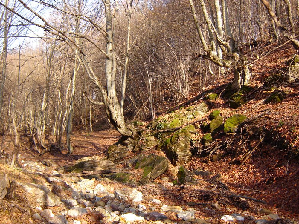 Разходка в есенната гора