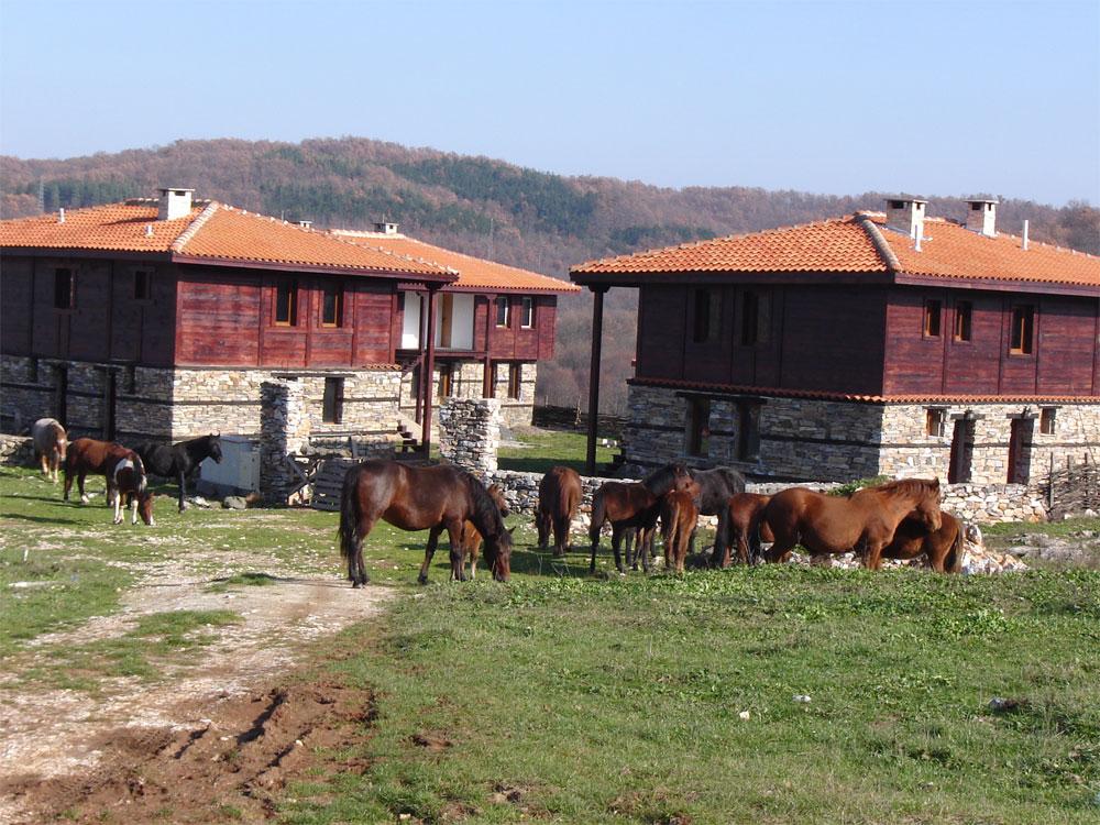 Стадо коне, пасящи на воля край новите къщи, съхранили тради