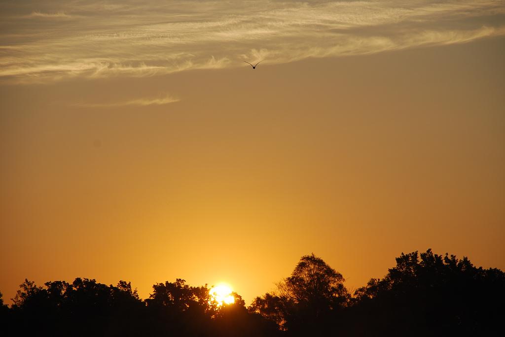 Полет над изгрева