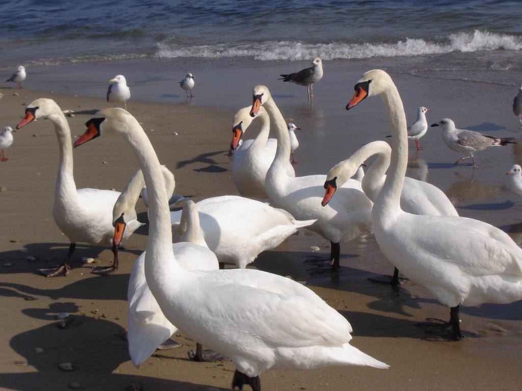 """Етюд от """"Дивите лебеди"""""""