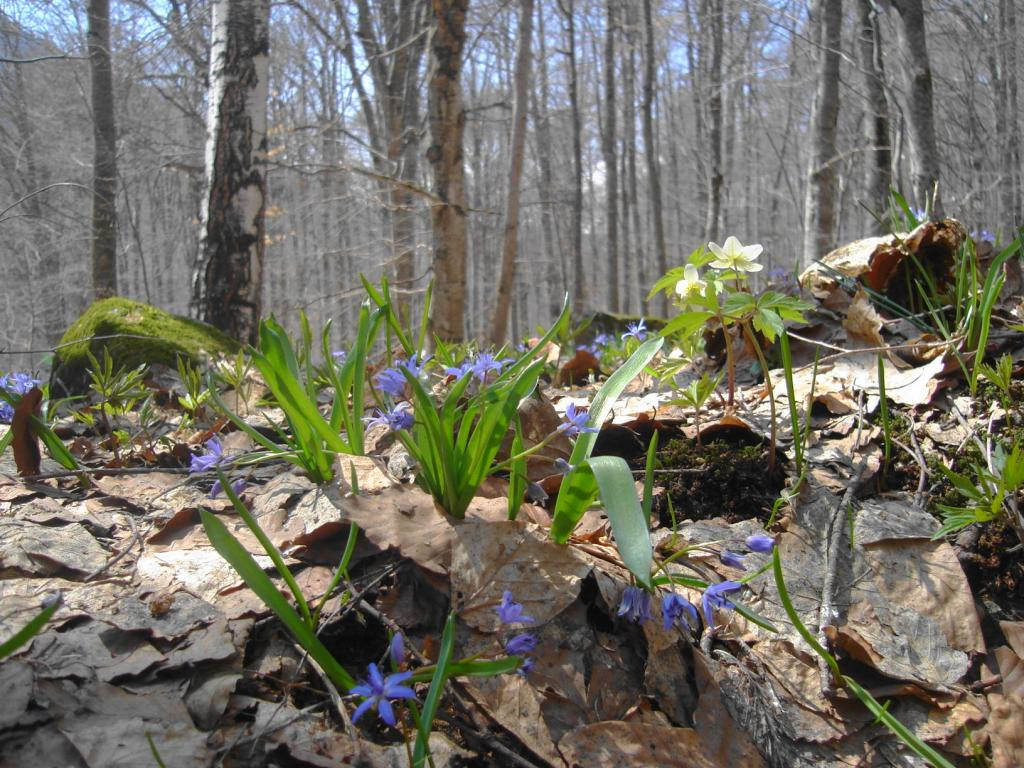 пролет в гората