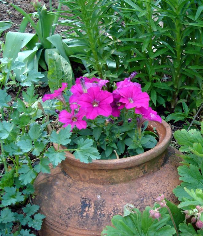в градината
