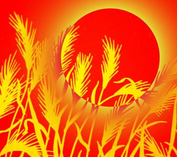 слънце в житни класове