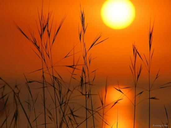 жито и слънце