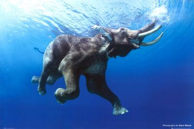Слонът и морето