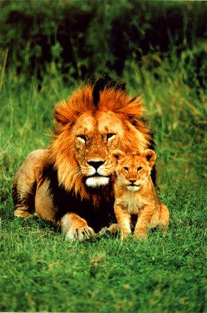 Царя и малкия принц