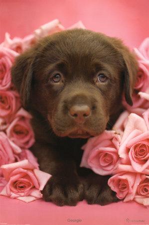 Кучешка романтика