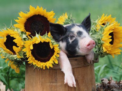Срец цветята и аз...