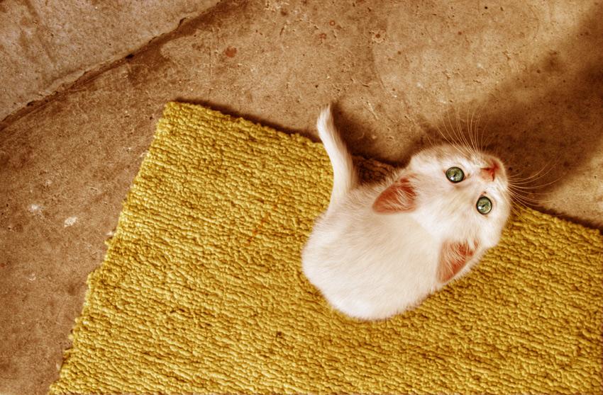 Малко сладко коте:)))