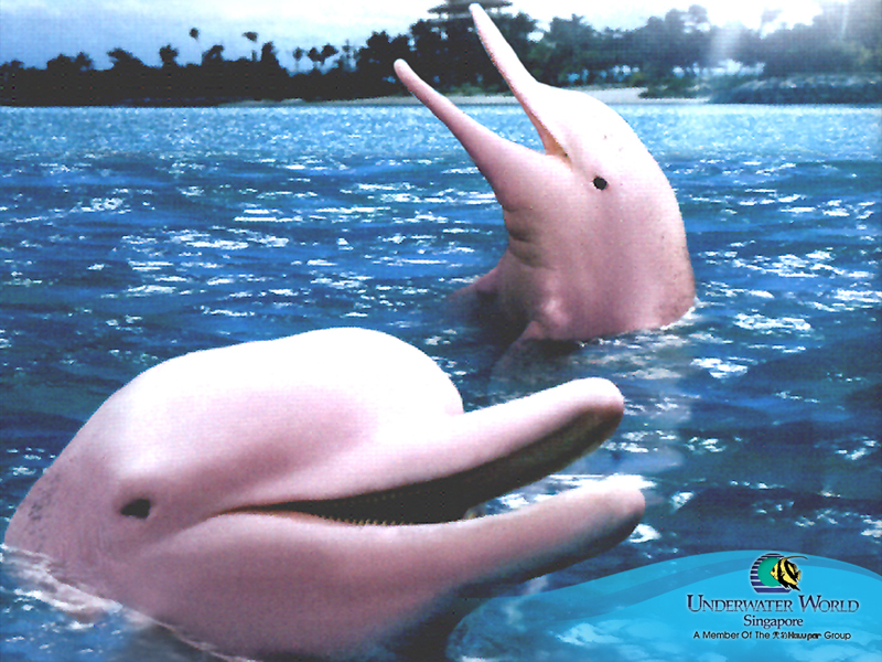 Розови Делфини
