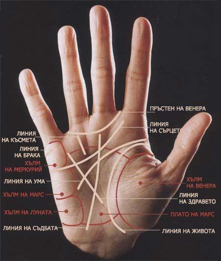 Линии на ръката. Хиромантия