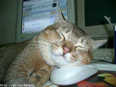 """""""Скъпи, пак спиш пред компютъра!"""""""