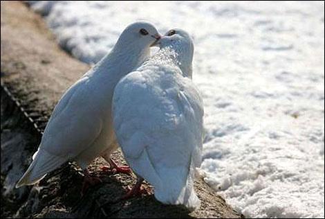 Целувка на плажа