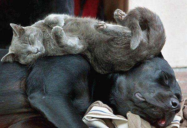 Коте спящо върху куче