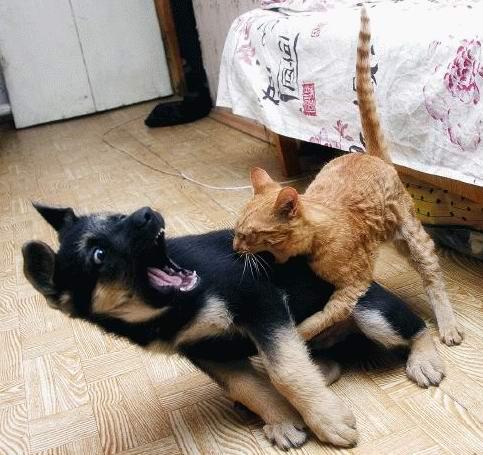 Коте в нервен срив