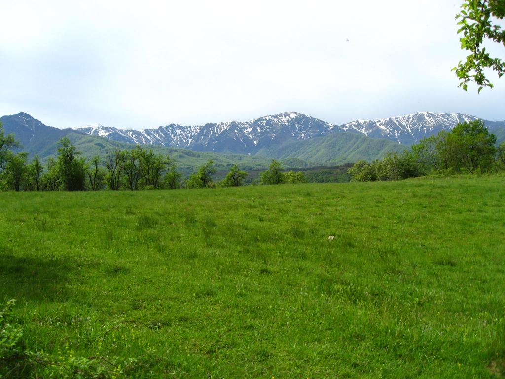 Полянка със сочна :-)) трева