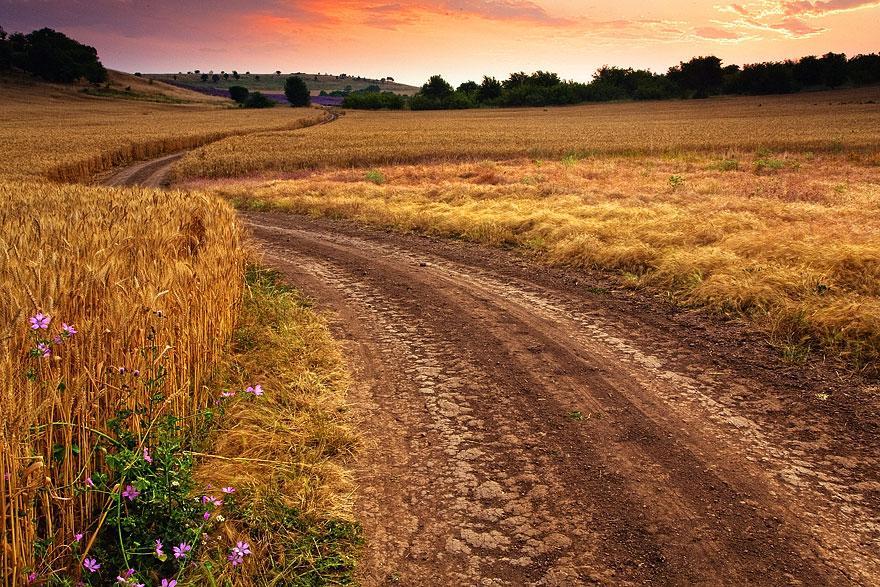Път през житата