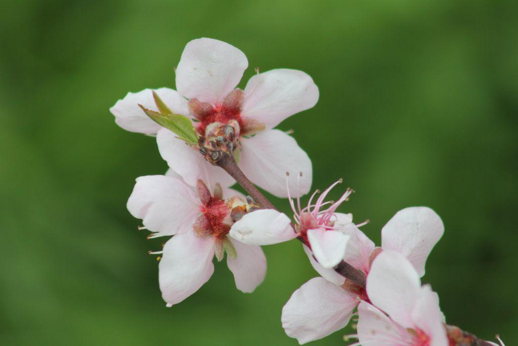 Цветчета