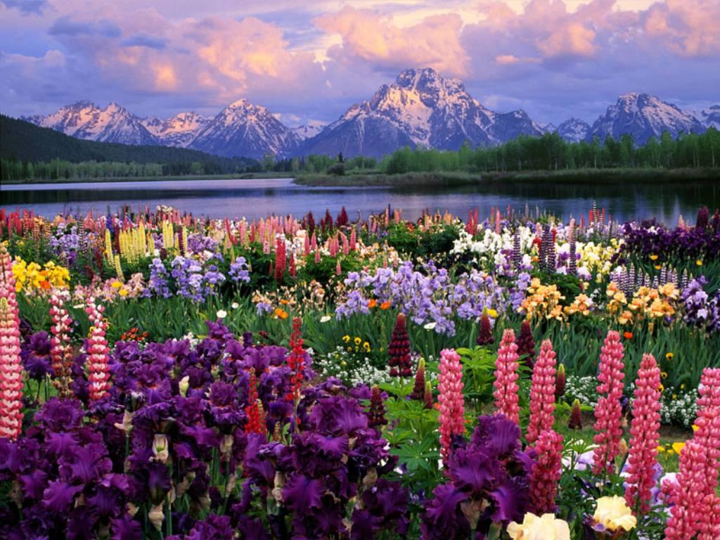 диви цветя и планини