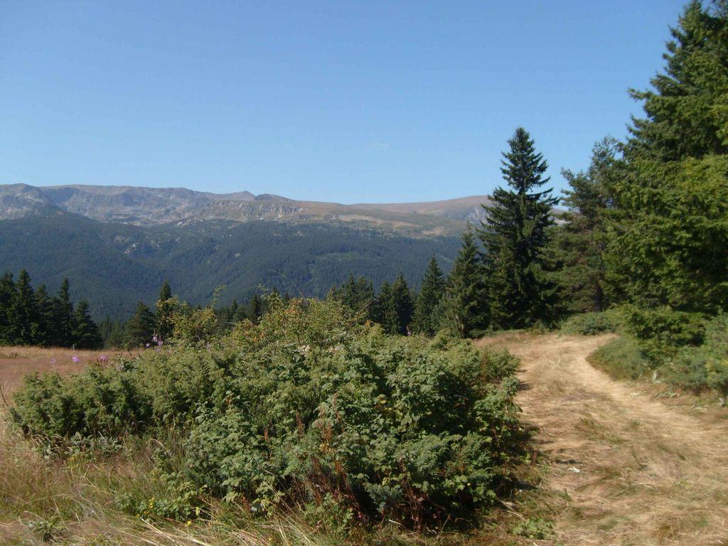 Зекирица - изглед от пътя