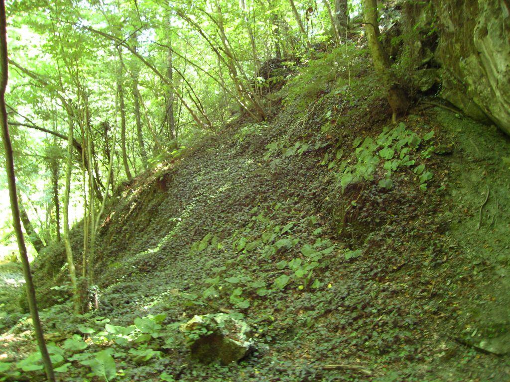 Гората в близост до Индипасха
