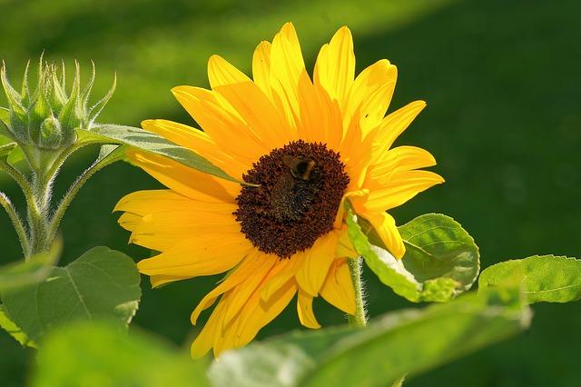 flower-869629_640.jpg