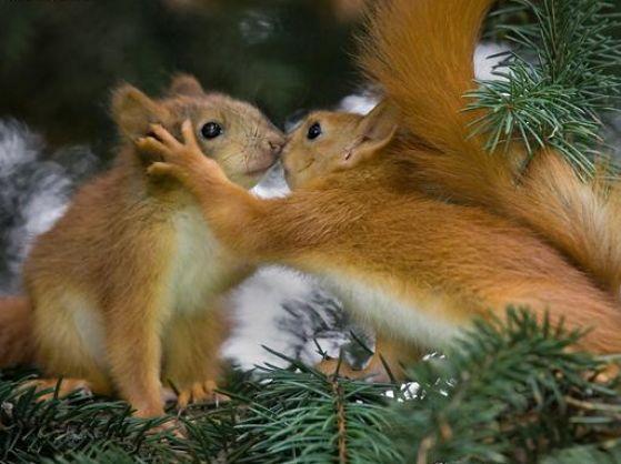 foto--veverice--vevericka--bozk--priatelstvo--laska-4271.jpg