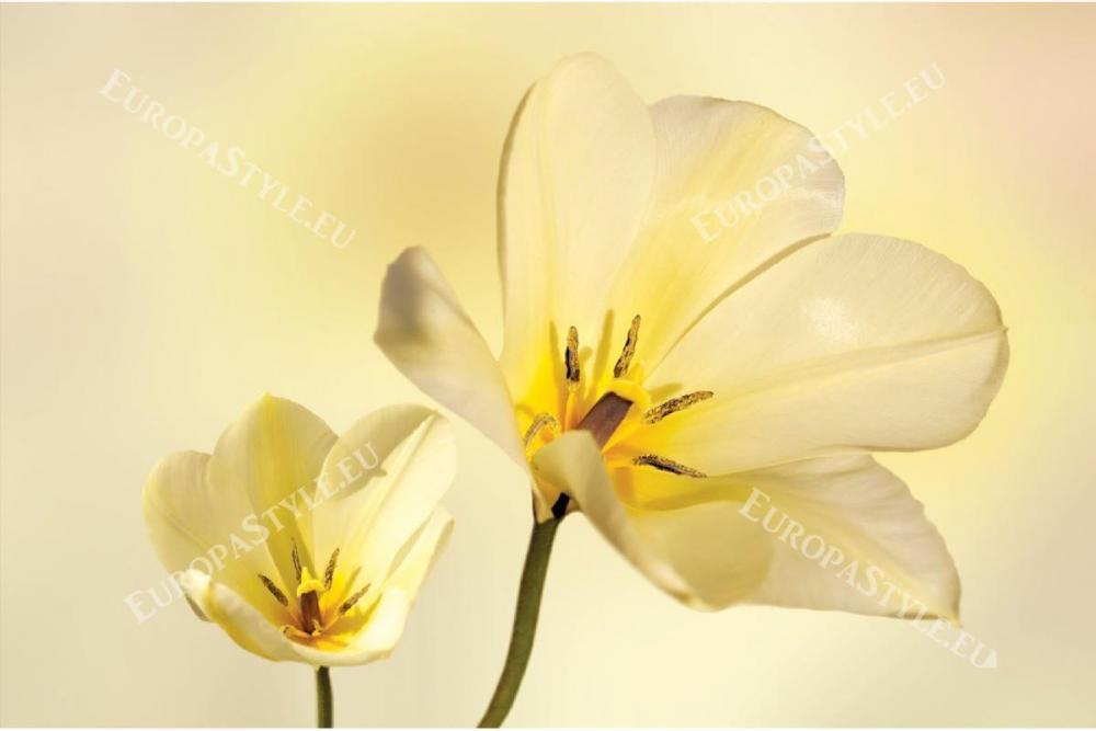 0310-245-P2-fototapeti-negni-gylti-cvetya-murals-yellow-flowers1-1200x800_0.jpg